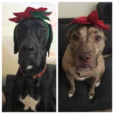 Silly Hat Sunday 32: Flower power!