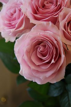 rose Remenbrance