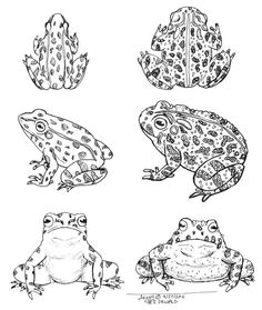 10 Best Literature activities for Frog and Toad images