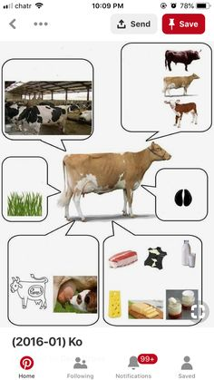Farm Activities, Kids Learning Activities, Preschool Activities, Farm Animals, Animals And Pets, Animals And Their Homes, Kindergarten Inquiry, Farm Art, Animal Projects