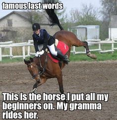 1000+ ideas about Funny Horse Memes on Pinterest | Funny Horses ...