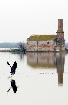 "2º premio del concurso de fotografía 'El Agua': ""Aleteo"", de Jake Sadhu Abbott Abbott, Bald Eagle, Animals, Pageants, Pageant Photography, Door Prizes, Water, Fotografia, Animales"