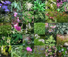 30 Vaste planten voor een droge schaduw border
