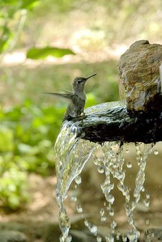 "Hummingbirds in your garden: provide a small waterfall source and watch them bathe!   I have had them ""land"" on the fan spray when watering and repeatedly slide down the spray. Spraying large leaved plants with water will be used to bathe by more than just hummers (Tanagers!)"