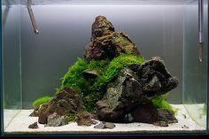 very clean aquascape