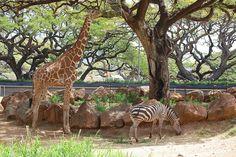 #Honolulu #Zoo #Oahu #Hawaii