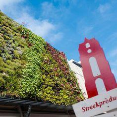 Hanging garden @Oosterstraat