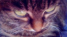 .. big eyes