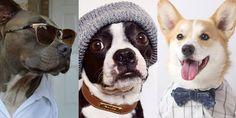 Mr. Porter Taps Stylish Dogs of Instagram for Spring Fashion Tips  - HarpersBAZAAR.com