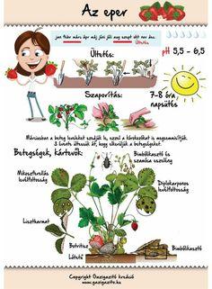 Easy Garden, Herb Garden, Garden Plants, Home Vegetable Garden, Home And Garden, Back Garden Landscaping, Medicinal Plants, Back Gardens, Gardening Tips