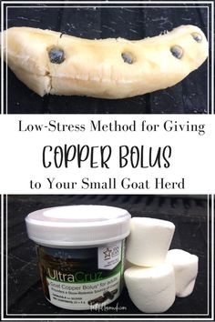 Giving Copper Bolus to goats is vital for a healthy goat herd. Find out everything you need to know about administering copper bolus to your herd here! Cabras Boer, Goat Feeder, Small Goat, Raising Goats, Raising Chickens, Goat Barn, Chicken Feed, Goat Farming, Baby Goats