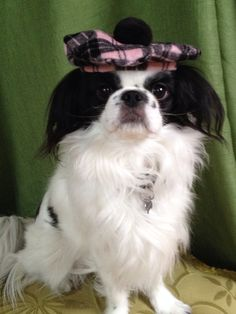 Pink and Black Plaid Dog Hat Scottish Tam Style by Doginafez