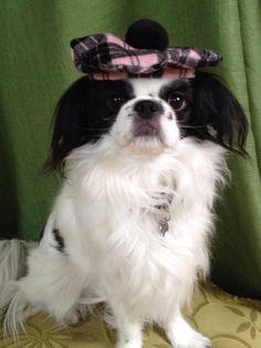 Pink and Black Plaid Dog Hat Scottish Tam Style by Doginafez