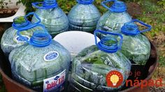 Dopestujte si bohatú úrodu uhorky v plastovej fľaši: Je to jednoduché a nepotrebujte ani záhradu!