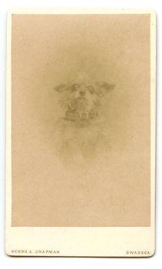 Scruffy Terrier Dog Antique Victorian CDV Photo by AuntieGVintage, £8.00