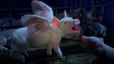 """Animals Australia - Pigs fly. And sing. With chickens. by FSM. FSM has created a TV, cinema and online campaign, """"Somewhere"""", featuring a CG pig for animal cruelty prevention charity, Animals Australia."""