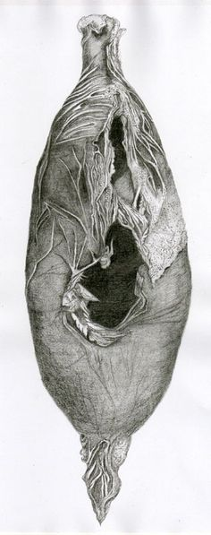 Cocoon drawing