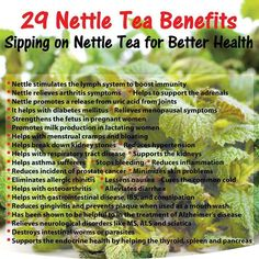 benefits of nettle tea - Pesquisa Google http://teapavse.com/healthiest-teas-to-drink/is-peppermint-tea-good-for-cold/