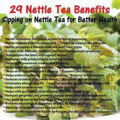 benefits of nettle tea - Pesquisa Google