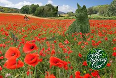 The Topiary Cat & The Topiary Kitten visit the poppy field… Topiary Garden, Topiaries, Beautiful Flowers, Beautiful Pictures, Parks, Surreal Artwork, Cat Statue, Cat Garden, Closer To Nature