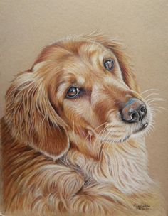 Is there a best black paper for colored pencil art? CP artist Carrie Lewis answers this question with a few recommendations. Horse Drawings, Animal Drawings, Wolf Drawings, Realistic Drawings, Dog Pencil Drawing, Drawing Art, Army Drawing, Pencil Sketching, Drawing Faces