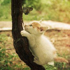 .kitten.
