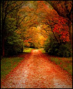 Our ever changing seasons, autumn in Indiana,