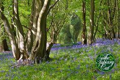 The Topiary Cat in the bluebell wood - Richard Saunders Garden Whimsy, Cat Garden, Lawn And Garden, Garden Art, Garden Tips, Garden Ideas, Vegetable Garden Design, Garden Landscape Design, Garden Landscaping