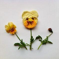 Pansy crochet pattern.