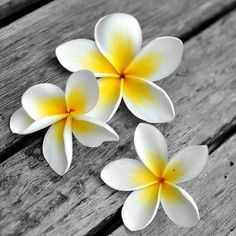 Frangipani - no matter where or when...it's the beautiful scent of travelling to different places. Love it.