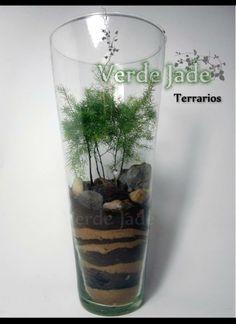 Terrarios FOREST Para mas información visitá nuestra web: www.VerdeJade.com Consultas: eve@verdejade.com Facebook: https://www.facebook.com/TerrariosVerdeJade