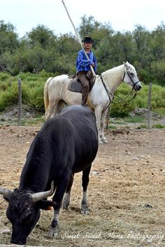 Gardian Camargue Provenza. Travel in France and learn fluent French with the Eurolingua Institute http://www.eurolingua.com/french/homestay-france-2