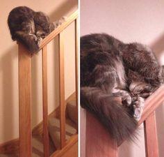 Just sleeping cats - Album on Imgur
