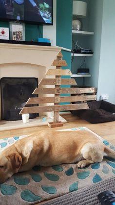 Pallet Xmas tree. And a lazy dog!