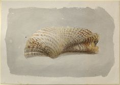 John Ruskin - Study of a Shell Recto: Study of a Shell. Verso: Two Diagrams of Cylinders drawn in Perspective John Ruskin, probably 1869 - 1885  Artist/maker - John Ruskin (1819 - 1900) Object type - drawing Material and technique - recto, watercolour and bodycolour over graphite; verso, graphite, all on wove paper Dimensions - 198 x 278 mm