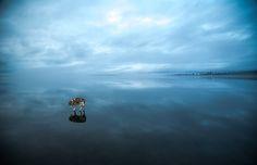 Siberian Huskies Walking On A Frozen Lake Is Like Something Out Of A Fairy Tale