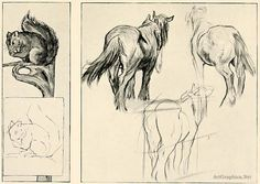 squirrel and horse, beginner guide to drawing