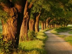 25 consejos para cuidar el medio ambiente. #TheTaiSpa #MedioAmbiente #Consejos #EcoTips
