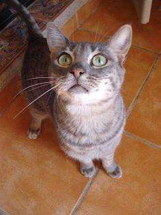 Helfende Hände e.V. - Katze Samson (EKH 3 Jahre) sucht ein Zuhause   Steckbrief…