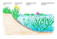 vijver ecologisch planten helder met aanduiding