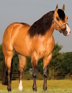 Walla Walla Dun It is the result of an exciting cross of two stellar bloodlines Hollywood Dun It and Taris Catalyst. Big Horses, Horses And Dogs, Horse Love, Beautiful Horse Pictures, Beautiful Horses, Animals Beautiful, American Quarter Horse, Quarter Horses, Horse Wallpaper