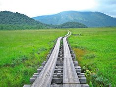 Marshland in Oze National park:Oze national park extends across 4 prefectures: Fukishima, Tochigi, Gunma and Niigata. #gunma #japan