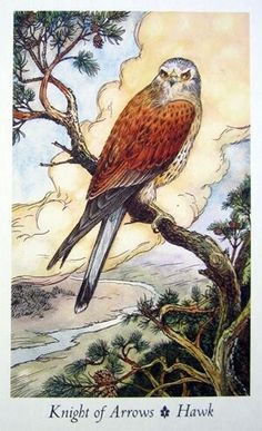 Bài viết Lá Knight of Arrows - Wildwood Tarot bài tarot Wildwood Tarot, Tarot By Cecelia, All Tarot Cards, Knight Sword, Love Tarot, Celtic Mythology, Tarot Card Meanings, Card Book, Tarot Card Decks
