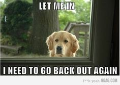 This is SO my dog!  It's like having a preschooler run in and out, in and out!!
