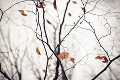e-aves:    december leafs by mstudiofoto on Flickr.  (via artpropelled)