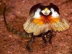 Image result for australian native animals species