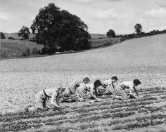 Land girls thinning turnips on a farm near Kendal in the Lake District ~ I couldn't see any American women doing this today. Sad everyone is so spoiled these days. Farm Photography, People Photography, Farmer Painting, Women's Land Army, Female Farmer, Land Girls, Brave Women, Female Hero, Women In History
