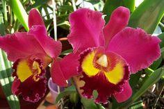 Így segítheted az orchideát, hogy szép virágba boruljon - MindenegybenBlog Orchid Plants, Orchids, Gardens, Google, Outdoor Gardens, Garden, House Gardens, Orchid
