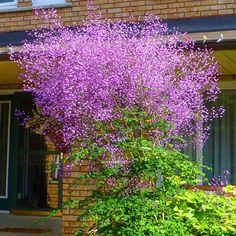 Terrace Garden, Garden Plants, Plant Design, Ikebana, Shrubs, Landscape Design, Purple, Wedding, Google
