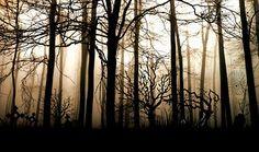 숲, 어두운, 안개, 우울한, 신비, 조명, 나무, 작곡, 기분, 빛